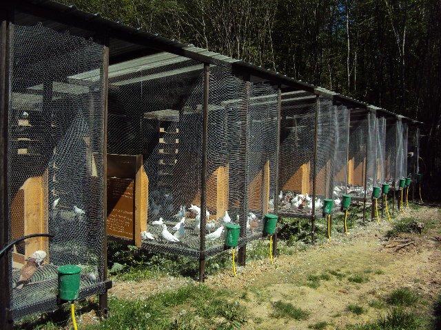l 39 levage de pigeons de chair de marie leguen bacchi gerin. Black Bedroom Furniture Sets. Home Design Ideas